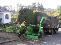 https://www.arborist-direct.co.uk/provider/edinburgh-tree-surgeon/ website