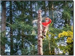 https://www.treesurgeoninguildford.co.uk/ website