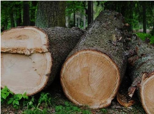 https://www.treeservicebeloit.com/ website