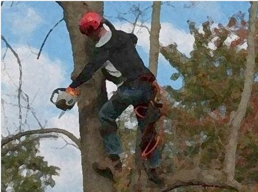 https://www.carmelintreeservice.com/ website