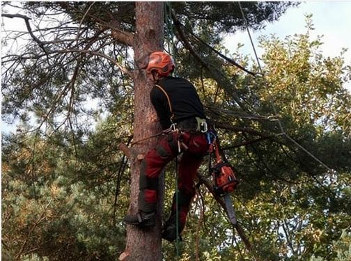 https://www.treeservicenorfolk.com/ website