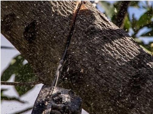 https://www.treeserviceroseville.com/ website