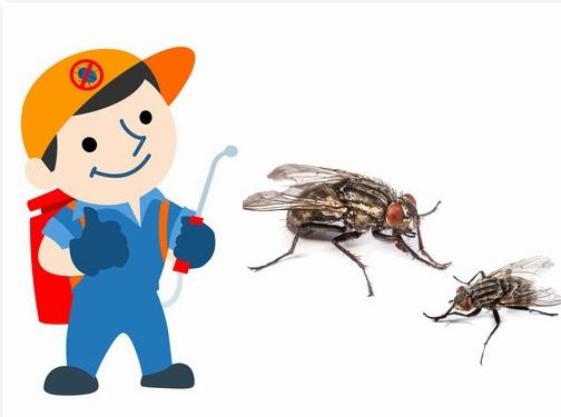 http://www.stopclusterflies.co.uk/ website